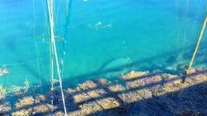 Kirkkaassa vedessä kalatkin näkyvät jos osaa katsoa tarkasti.