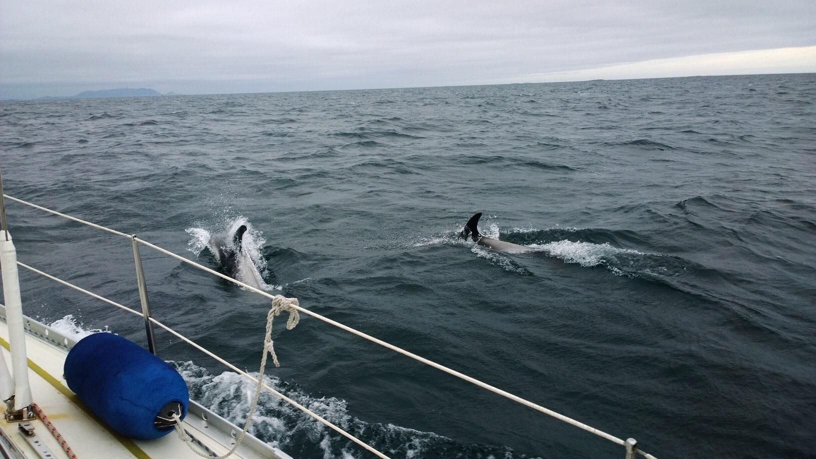 Delfiinit pitivät meille puolen tunnin esityksen!